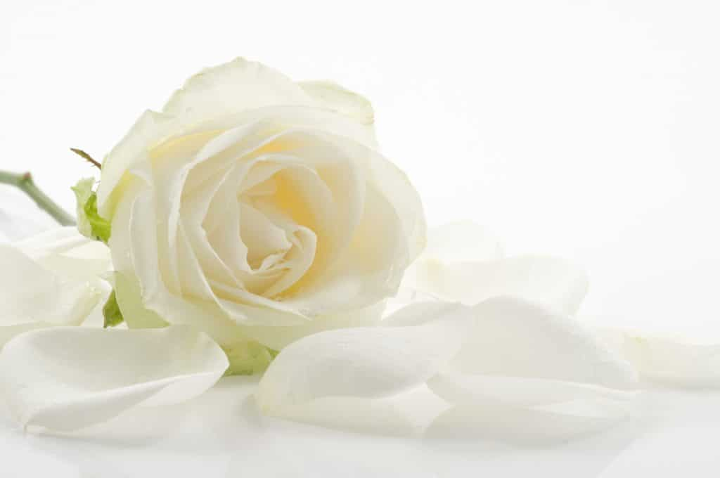 Funeral Services Singapore HomePage Image